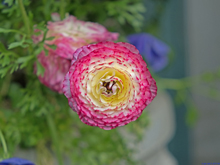 [First Flower]