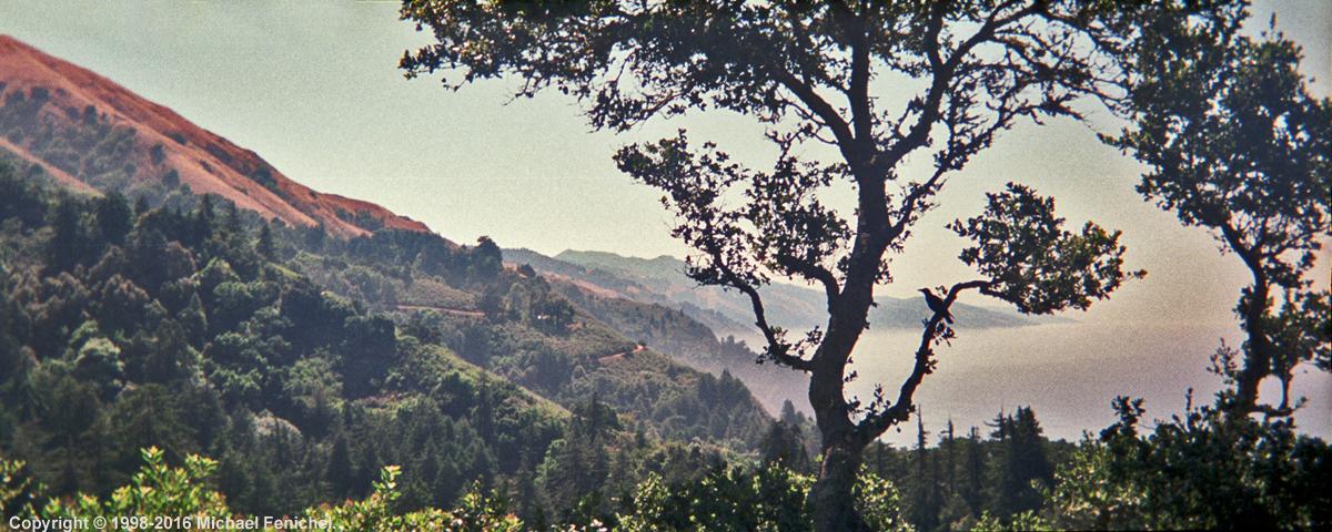 [Bird's Eye View from Nepenthe]