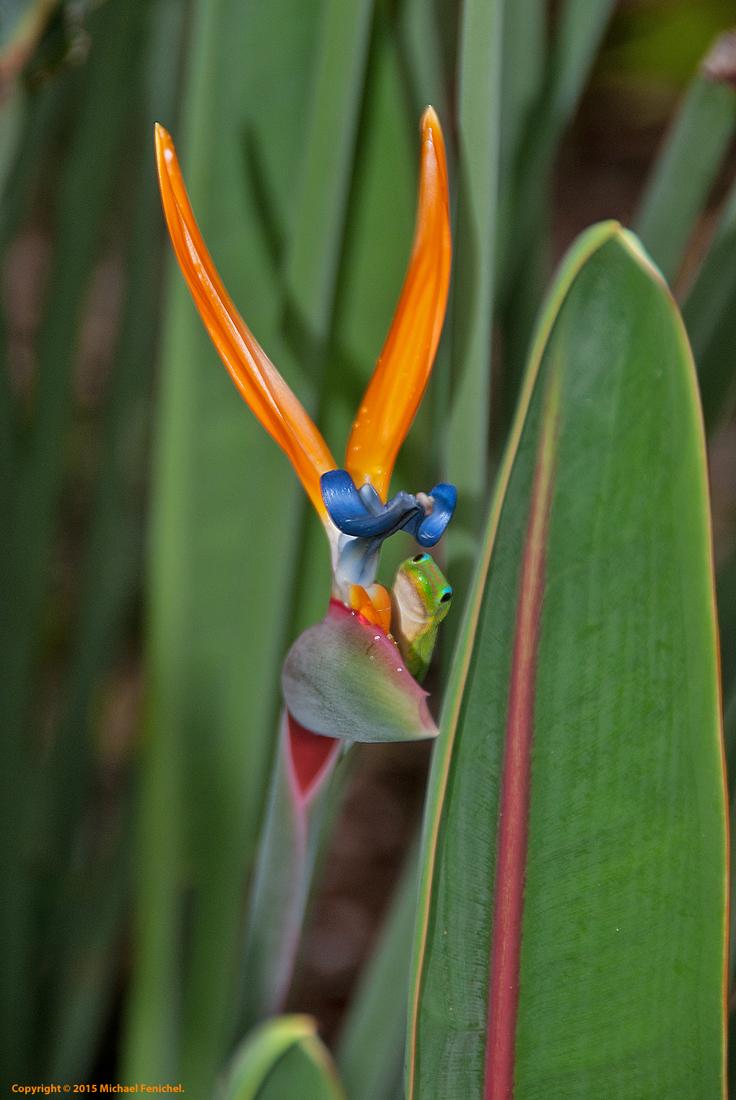 [Birds-Frog-Paradise]