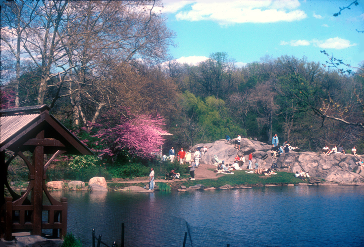 [Central Park Rocks and Color]