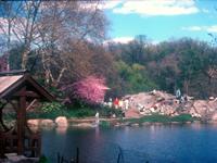 [Central Park Rocks and April Colors]