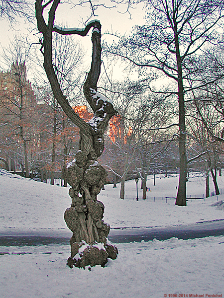 [Gnarled Tree in Snow]