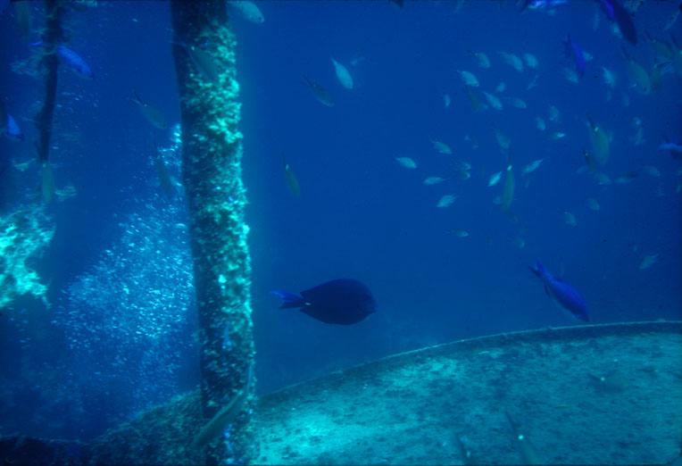 [Underwater Playground]