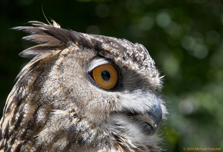 [Owl Eye]