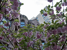 [Spring Blossoms]