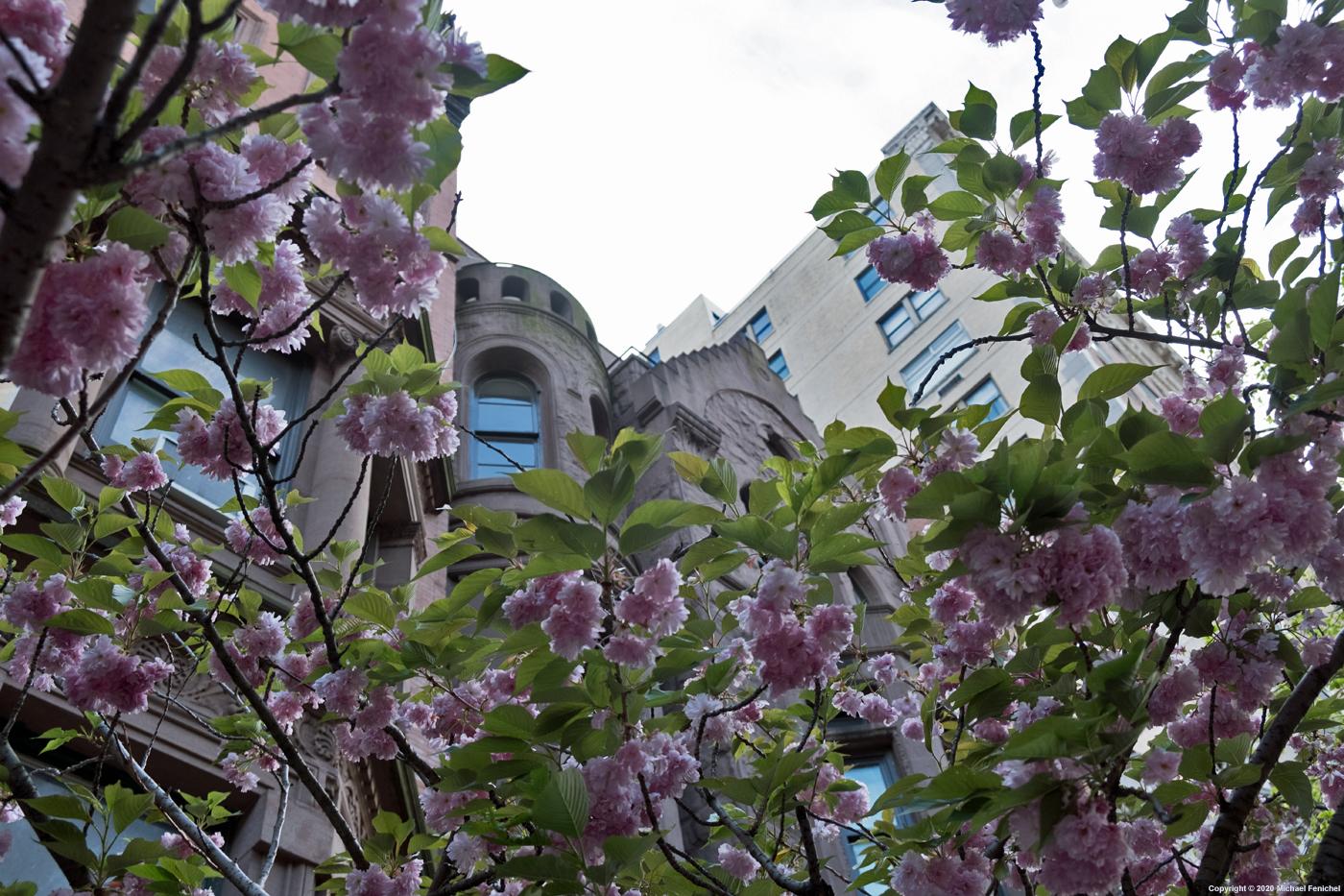 [Blossoms]