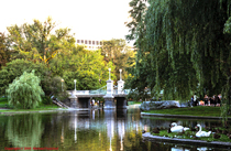 [Boston Public Gardens]
