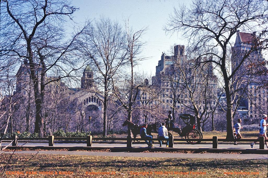 [Central Park Horse & Buggy]