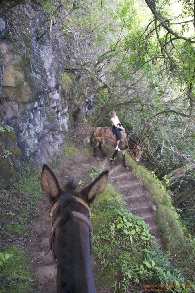 [Kalaupapa Trail by Mule]