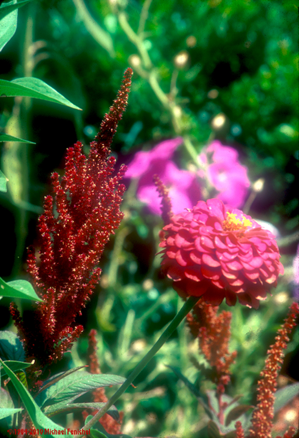 [Flowers Near Kismet]
