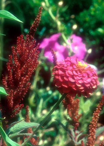 [Red Flower]