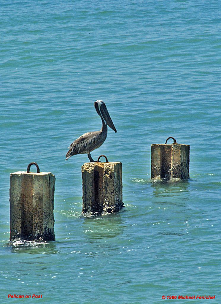 [Pelican on Post]