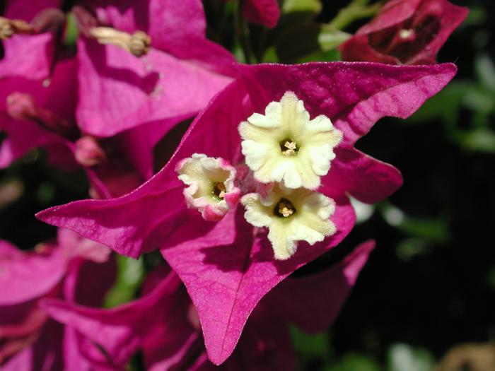 [Purple-Yellow Flower]