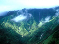 [Rain Forest]