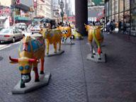 [Taxi Cows]